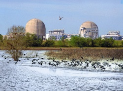 South Texas Project nuclear plant. Source: NRC